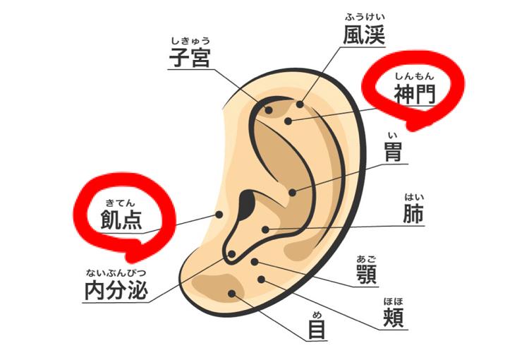 食欲の耳つぼを押す方法