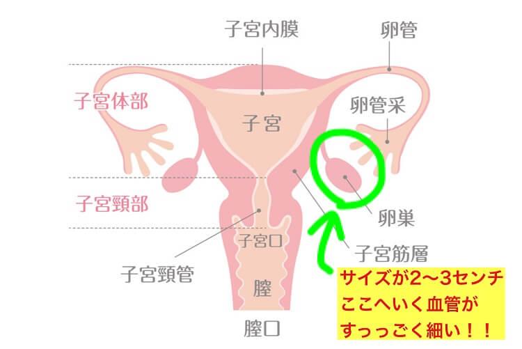 栄養や酸素やホルモンを伝達する血管