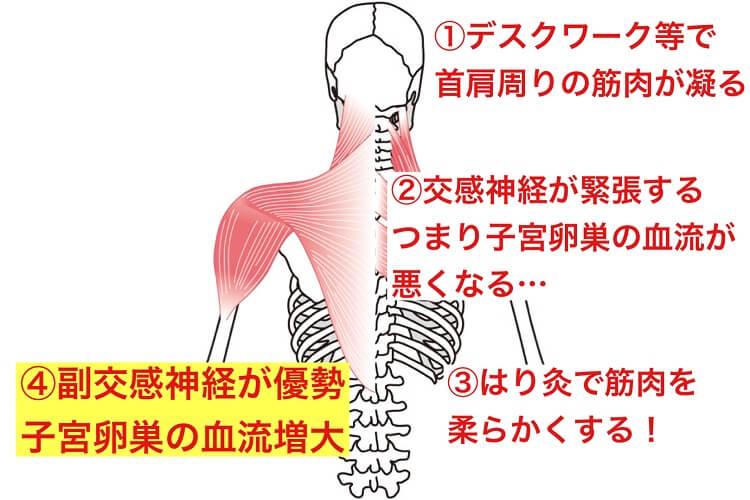 筋肉の緊張は交感神経が緊張します