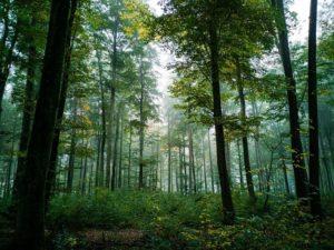 木をみて森をみず的なこと