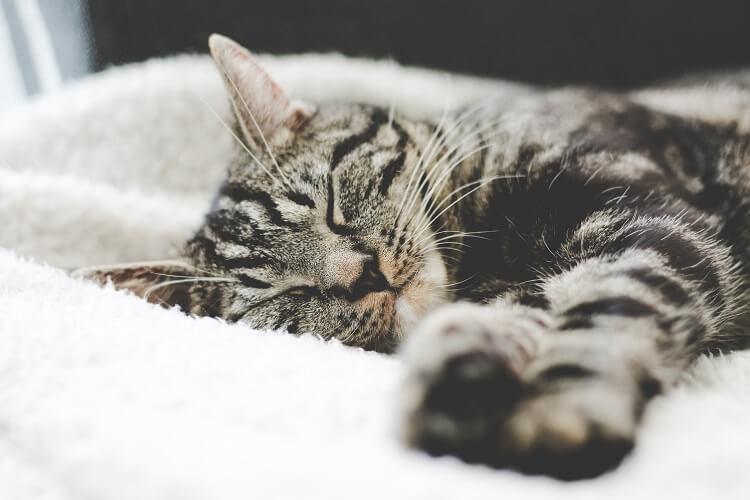 睡眠と妊活のポイント